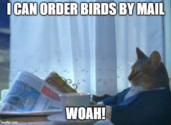 birds by mail |  I CAN ORDER BIRDS BY MAIL; WOAH! | image tagged in memes,i should buy a boat cat,birds,cats | made w/ Imgflip meme maker