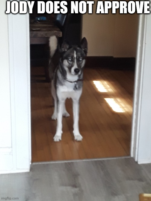 Make my dog a meme |  JODY DOES NOT APPROVE | image tagged in husky,jody,make him into a meme | made w/ Imgflip meme maker