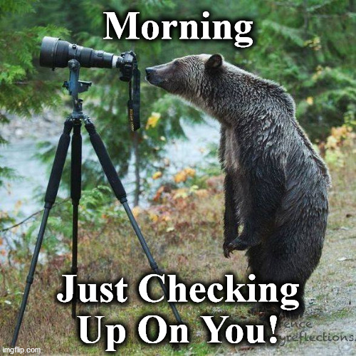 bear |  Morning; Just Checking Up On You! | image tagged in bear | made w/ Imgflip meme maker