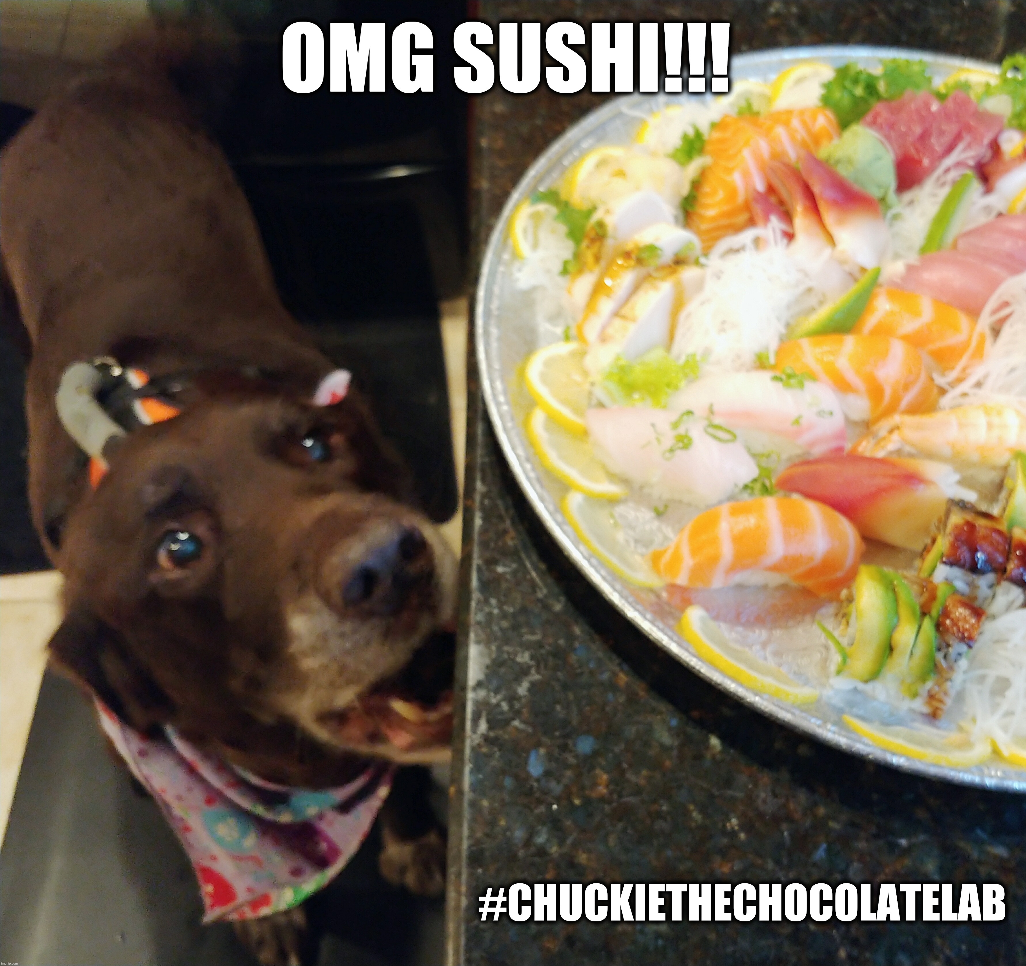 Omg SUSHI! |  OMG SUSHI!!! #CHUCKIETHECHOCOLATELAB | image tagged in chuckie the chocolate lab,dogs,memes,funny,sushi,funny animals | made w/ Imgflip meme maker