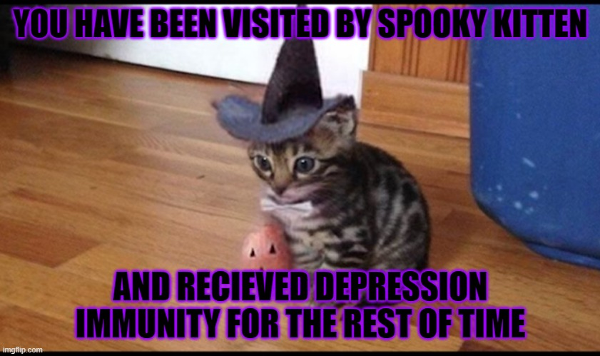 Halloween cat |  YOU HAVE BEEN VISITED BY SPOOKY KITTEN; AND RECIEVED DEPRESSION IMMUNITY FOR THE REST OF TIME | image tagged in halloween cat | made w/ Imgflip meme maker