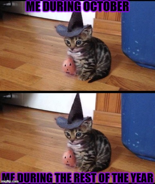 ME DURING OCTOBER; ME DURING THE REST OF THE YEAR | image tagged in halloween cat | made w/ Imgflip meme maker