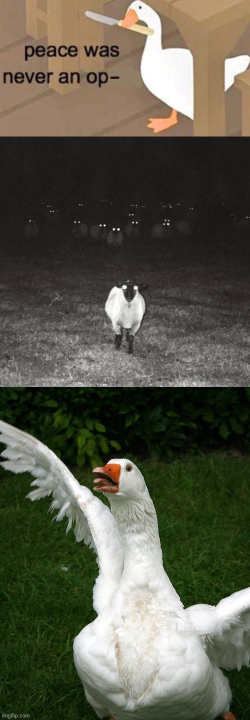 those sheep are scary |  - | image tagged in untitled goose peace was never an option | made w/ Imgflip meme maker