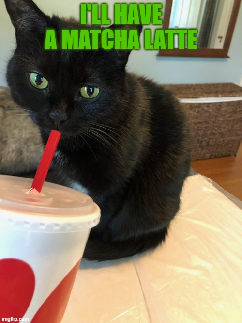 Cat drinking tea |  I'LL HAVE A MATCHA LATTE | image tagged in cat drinking tea | made w/ Imgflip meme maker