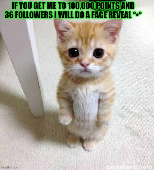 ^^ |  IF YOU GET ME TO 100,000 POINTS AND 36 FOLLOWERS I WILL DO A FACE REVEAL °•° | image tagged in memes,cute cat | made w/ Imgflip meme maker