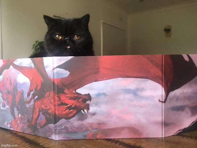 DnDCat | image tagged in dndcat | made w/ Imgflip meme maker