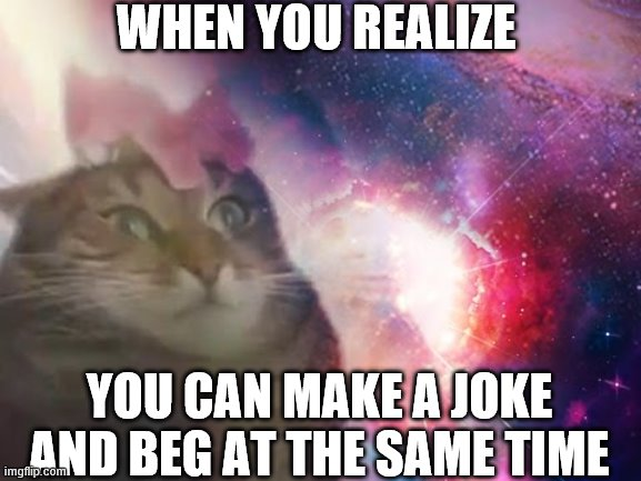 the prophecy is true cat | WHEN YOU REALIZE YOU CAN MAKE A JOKE AND BEG AT THE SAME TIME | image tagged in the prophecy is true cat | made w/ Imgflip meme maker