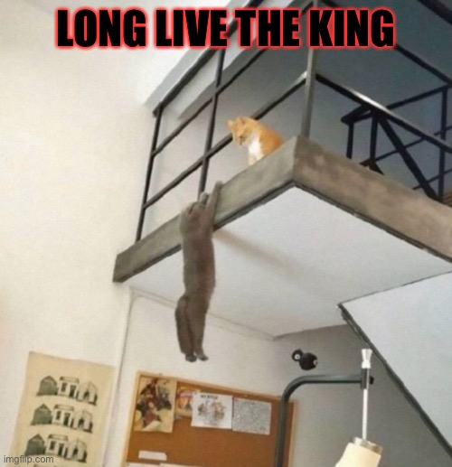 The original image was took from T33_TheBaconTaco25's post |  LONG LIVE THE KING | image tagged in the lion king,lion king,lion king meme,cats,cat,funny cats | made w/ Imgflip meme maker