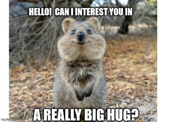 Quokka Hug |  HELLO!  CAN I INTEREST YOU IN; A REALLY BIG HUG? | image tagged in cute animals | made w/ Imgflip meme maker