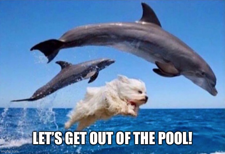 Dog swims with dolphins  | LET'S GET OUT OF THE POOL! | image tagged in dog swims with dolphins | made w/ Imgflip meme maker