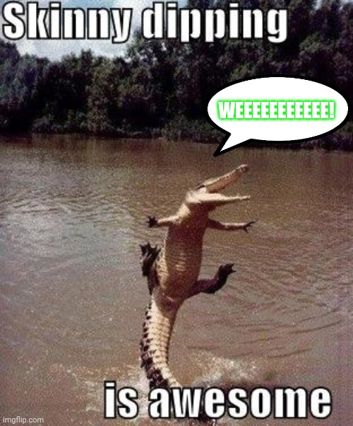 Gator don't give a dang | WEEEEEEEEEEE! | image tagged in alligator,gator,swimming | made w/ Imgflip meme maker