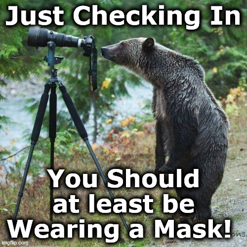 bear |  Just Checking In; You Should at least be Wearing a Mask! | image tagged in bear | made w/ Imgflip meme maker