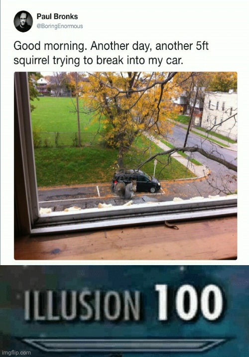 Illusion 100: This guy is having an illusion about the 5ft squirrel trying to break into his car. | image tagged in illusion 100,optical illusion,squirrel,funny,memes,meme | made w/ Imgflip meme maker