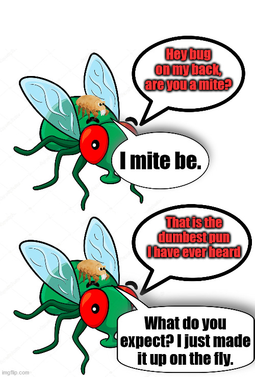 This meme will just not fly. |  Hey bug on my back, are you a mite? I mite be. That is the dumbest pun I have ever heard; What do you expect? I just made it up on the fly. | image tagged in blank white template,dad joke,bad pun | made w/ Imgflip meme maker