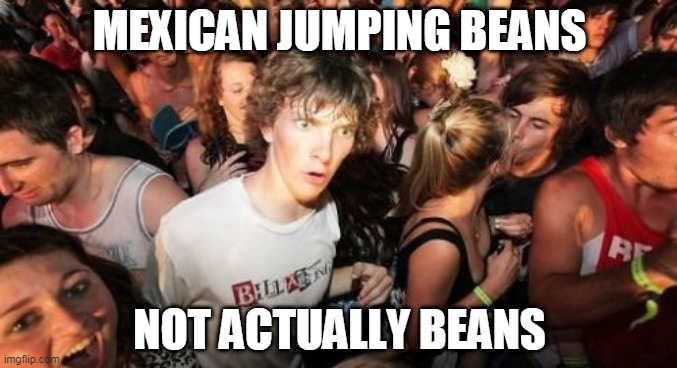 Sudden Clarity Clarence |  MEXICAN JUMPING BEANS; NOT ACTUALLY BEANS | image tagged in memes,sudden clarity clarence | made w/ Imgflip meme maker