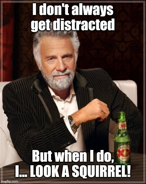 The Most Interesting Man In The World |  I don't always get distracted; But when I do, I... LOOK A SQUIRREL! | image tagged in memes,the most interesting man in the world,funny,distracted,you have been distracted,gifs | made w/ Imgflip meme maker