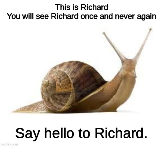 This is Richard. |  This is Richard You will see Richard once and never again; Say hello to Richard. | image tagged in snail,wholesome,memes,funny,cute | made w/ Imgflip meme maker
