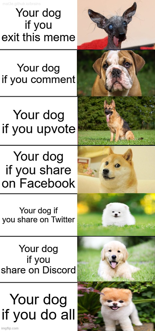 Your Dog |  Your dog if you exit this meme; Your dog if you comment; Your dog if you upvote; Your dog if you share on Facebook; Your dog if you share on Twitter; Your dog if you share on Discord; Your dog if you do all | image tagged in 7-tier expanding brain | made w/ Imgflip meme maker