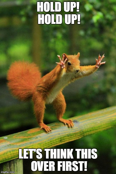 HOLD UP! HOLD UP! LET'S THINK THIS OVER FIRST! | image tagged in hold up,funny,squirrels,animals | made w/ Imgflip meme maker