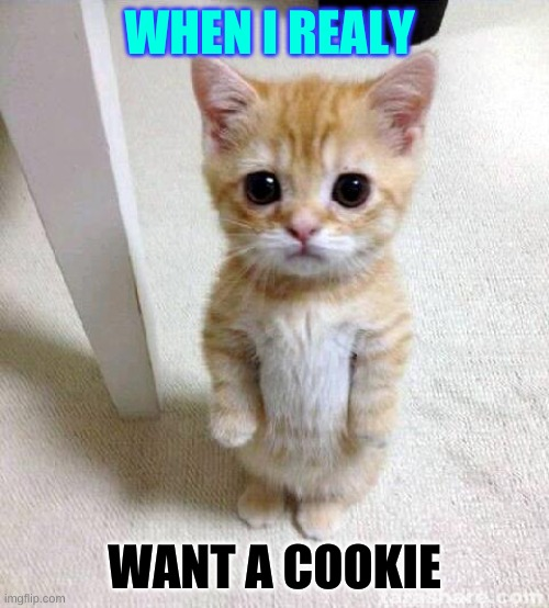 realy cute cat |  WHEN I REALY; WANT A COOKIE | image tagged in memes,cute cat | made w/ Imgflip meme maker