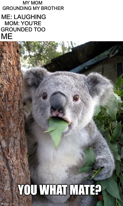 Surprised Koala Meme |  MY MOM  GROUNDING MY BROTHER; ME: LAUGHING; MOM: YOU'RE GROUNDED TOO; ME; YOU WHAT MATE? | image tagged in memes,surprised koala | made w/ Imgflip meme maker