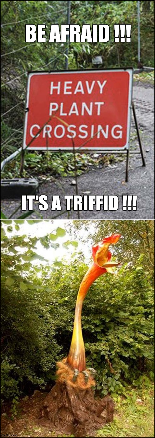 Heavy Plant Crossing |  BE AFRAID !!! IT'S A TRIFFID !!! | image tagged in fun,road sign,triffids | made w/ Imgflip meme maker
