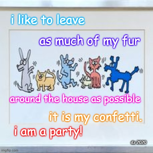 I am a party |  i like to leave; as much of my fur; around the house as possible; it is my confetti. i am a party! dz 2020 | image tagged in dogs,cats,furry,hair,party,cute animals | made w/ Imgflip meme maker