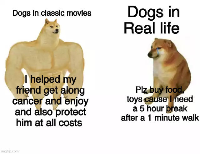 Buff Doge vs. Cheems |  Dogs in Real life; Dogs in classic movies; Plz buy food, toys cause I need a 5 hour break after a 1 minute walk; I helped my friend get along cancer and enjoy and also protect him at all costs | image tagged in buff doge vs cheems,memes,meme,funny meme,funny,hot memes | made w/ Imgflip meme maker