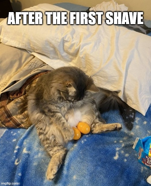 . . . |  AFTER THE FIRST SHAVE | image tagged in funny,cats,shaving,pets,balls | made w/ Imgflip meme maker
