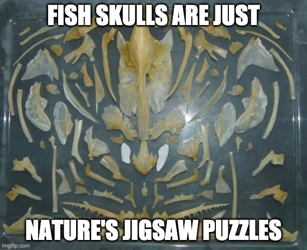 Fish skulls are just Nature's jigsaw puzzles |  FISH SKULLS ARE JUST; NATURE'S JIGSAW PUZZLES | image tagged in fish | made w/ Imgflip meme maker