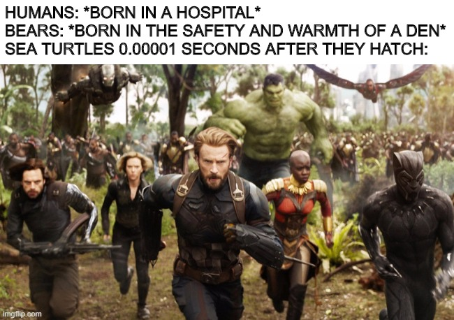 Avengers Infinity War Running |  HUMANS: *BORN IN A HOSPITAL* BEARS: *BORN IN THE SAFETY AND WARMTH OF A DEN* SEA TURTLES 0.00001 SECONDS AFTER THEY HATCH: | image tagged in avengers infinity war running | made w/ Imgflip meme maker