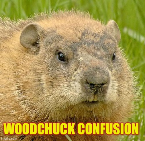 woodchuckpun | WOODCHUCK CONFUSION | image tagged in woodchuckpun | made w/ Imgflip meme maker