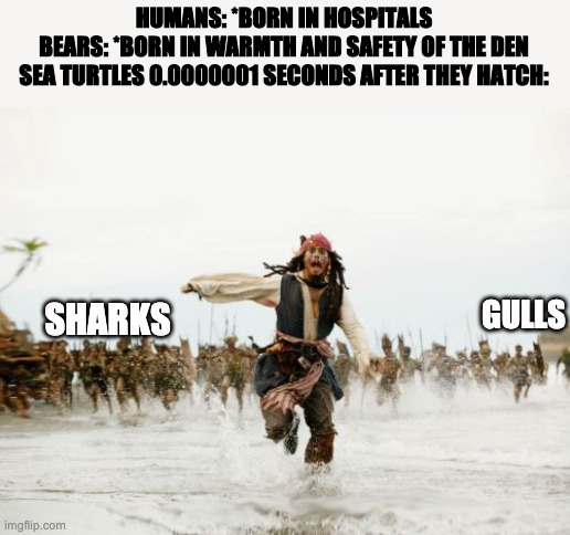 Jack Sparrow Being Chased Meme |  HUMANS: *BORN IN HOSPITALS BEARS: *BORN IN WARMTH AND SAFETY OF THE DEN SEA TURTLES 0.0000001 SECONDS AFTER THEY HATCH:; SHARKS; GULLS | image tagged in memes,jack sparrow being chased | made w/ Imgflip meme maker