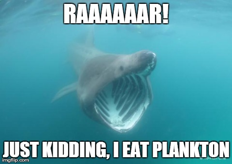While preparing for my Shark hangout tomorrow, some of my panel and I got into a meme war. This one won. (r/funny)