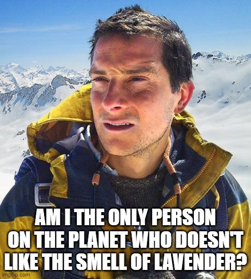 Lavender Stinks |  AM I THE ONLY PERSON ON THE PLANET WHO DOESN'T LIKE THE SMELL OF LAVENDER? | image tagged in memes,bear grylls,lavender,lavender stinks | made w/ Imgflip meme maker