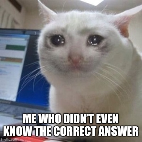 Crying cat | ME WHO DIDN'T EVEN KNOW THE CORRECT ANSWER | image tagged in crying cat | made w/ Imgflip meme maker