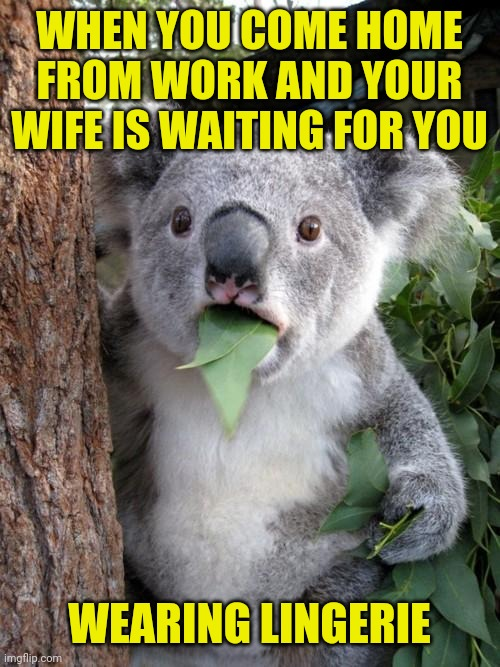 sexywife |  WHEN YOU COME HOME FROM WORK AND YOUR WIFE IS WAITING FOR YOU; WEARING LINGERIE | image tagged in memes,surprised koala,funny,funny memes,wife,husband | made w/ Imgflip meme maker