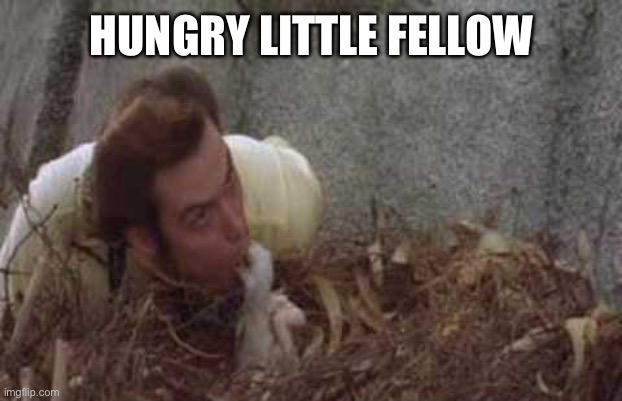 HUNGRY LITTLE FELLOW | made w/ Imgflip meme maker