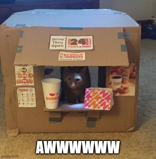 awww |  AWWWWWW | image tagged in memes,funny,dunkin donuts,cats,shop | made w/ Imgflip meme maker
