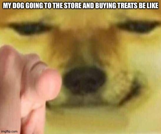 Cheems Pointing At You |  MY DOG GOING TO THE STORE AND BUYING TREATS BE LIKE | image tagged in cheems pointing at you | made w/ Imgflip meme maker