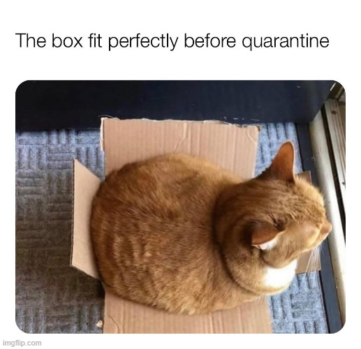 adorbs (repost) | image tagged in cats,cat,overweight,weight gain,box,repost | made w/ Imgflip meme maker