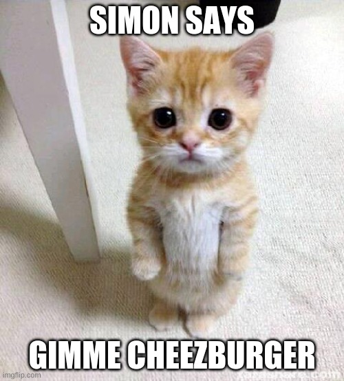Cute Cat |  SIMON SAYS; GIMME CHEEZBURGER | image tagged in memes,cute cat | made w/ Imgflip meme maker