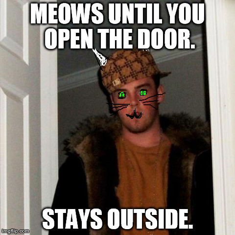Scumbag Steve Meme | MEOWS UNTIL YOU OPEN THE DOOR. STAYS OUTSIDE. | image tagged in memes,scumbag steve | made w/ Imgflip meme maker