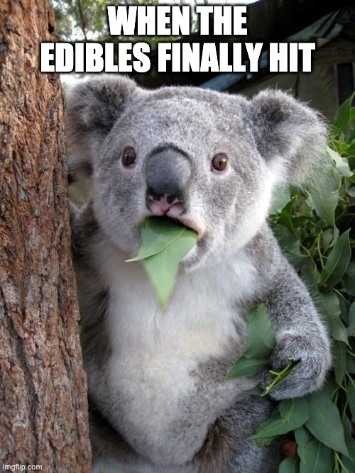 Surprised Koala |  WHEN THE EDIBLES FINALLY HIT | image tagged in memes,weed,edibles,week man,thedentist | made w/ Imgflip meme maker