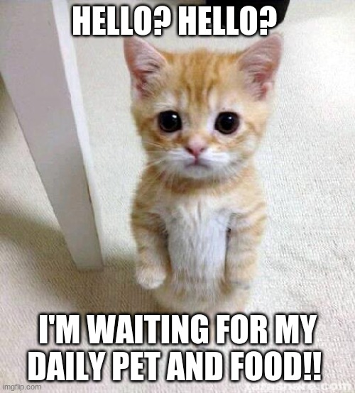 Adorable hungry kitten |  HELLO? HELLO? I'M WAITING FOR MY DAILY PET AND FOOD!! | image tagged in memes,cute cat | made w/ Imgflip meme maker