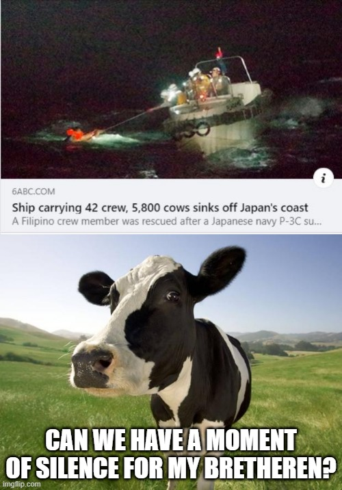 Poor cows |  CAN WE HAVE A MOMENT OF SILENCE FOR MY BRETHEREN? | image tagged in cow | made w/ Imgflip meme maker