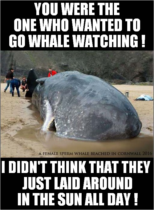 Disappointing Whale Watching |  YOU WERE THE ONE WHO WANTED TO GO WHALE WATCHING ! I DIDN'T THINK THAT THEY; JUST LAID AROUND IN THE SUN ALL DAY ! | image tagged in fun,whale,dissapointment | made w/ Imgflip meme maker
