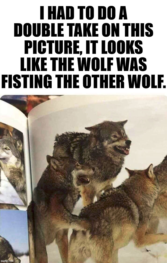 I am not judging these wolves, they can do what they want. |  I HAD TO DO A DOUBLE TAKE ON THIS PICTURE, IT LOOKS LIKE THE WOLF WAS FISTING THE OTHER WOLF. | image tagged in fist,wolves,totally looks like,funny picture | made w/ Imgflip meme maker