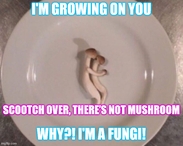 Mushroom Cuddle |  I'M GROWING ON YOU; SCOOTCH OVER, THERE'S NOT MUSHROOM; WHY?! I'M A FUNGI! | image tagged in mushroom,haiku,bad pun,mushrooms | made w/ Imgflip meme maker