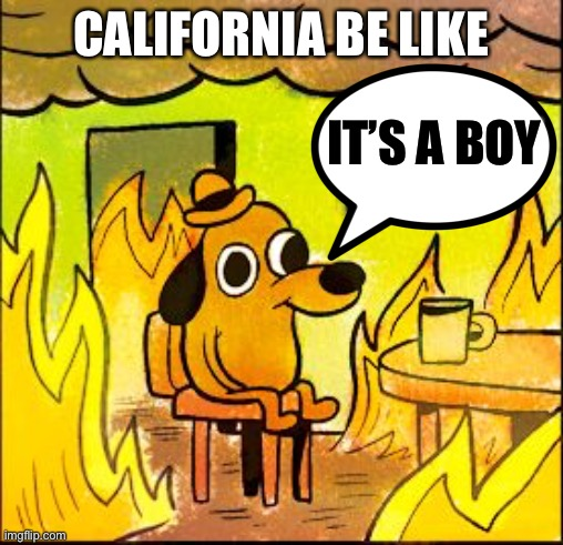 When your gender reveal party sets half of California on fire... |  CALIFORNIA BE LIKE; IT'S A BOY | image tagged in this is fine,california,california fires,gender reveal | made w/ Imgflip meme maker